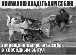 dengerous dog