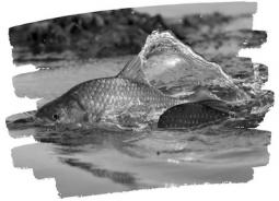 fishcontrol21