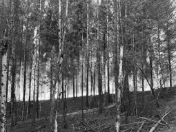 forestfire2020