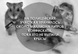 beer mice