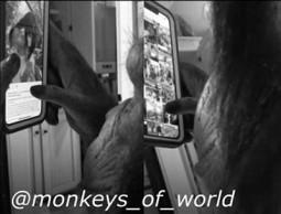 monkey insta